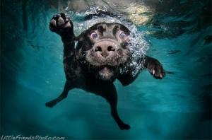 Underwater Dogs 3