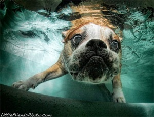 Underwater Dogs 4
