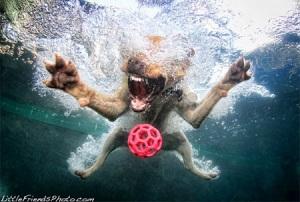 Underwater Dogs 5