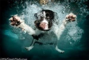 Underwater Dogs 6